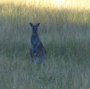 Roo - cropped off