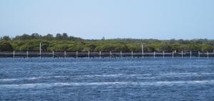 Oyster racks