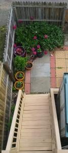 Stairway to peonies