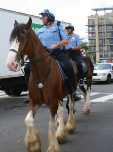 DC Mounties