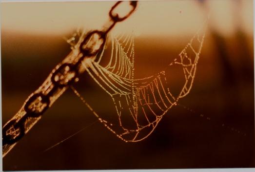Spider web - Jan 1984 1 e