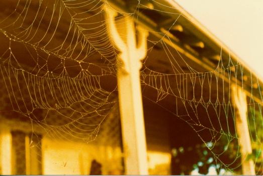 Spider web -  Jan 1984 2 e2