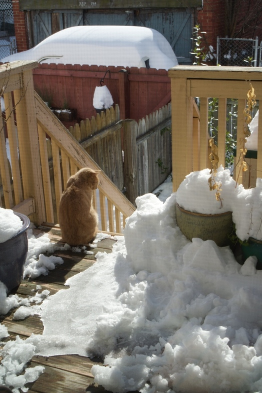 Gingermutt in ice